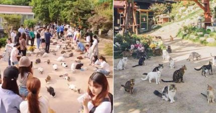 史上第一家「野外貓咪咖啡館」!野餐時被上百隻喵喵圍繞...「開飯影片」貓奴暴動:是天堂