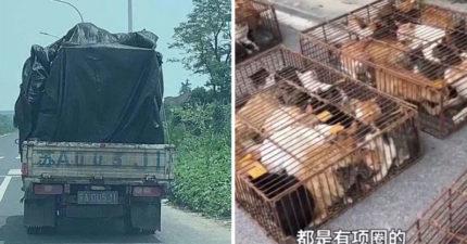 中國貨車傳「大量喵喵聲」路人報警!他跟蹤驚見目的地「肉品加工廠」...700隻貓被製成罐頭