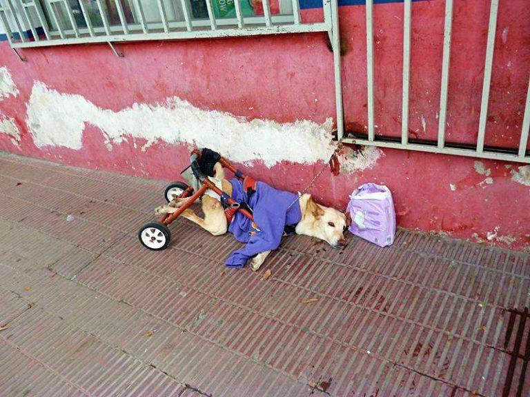 流浪狗「被主人丟在街頭」身邊只剩尿布 牠「找到新主人後」的生活讓網爆淚!