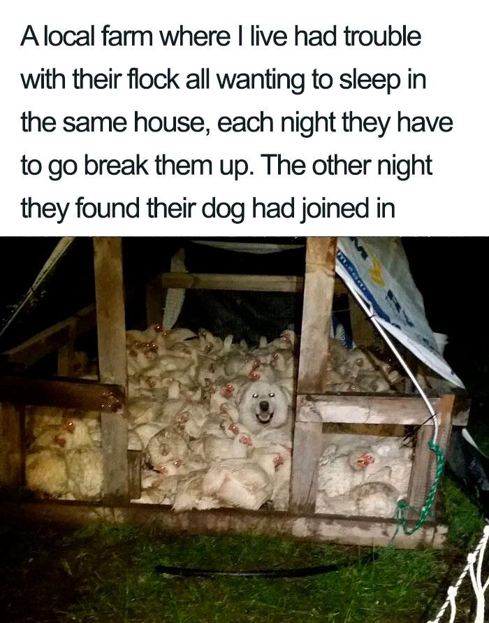 30隻「讓你覺得不再孤單」的超療癒狗狗 牠機智「使出絕招」救了主人一命!