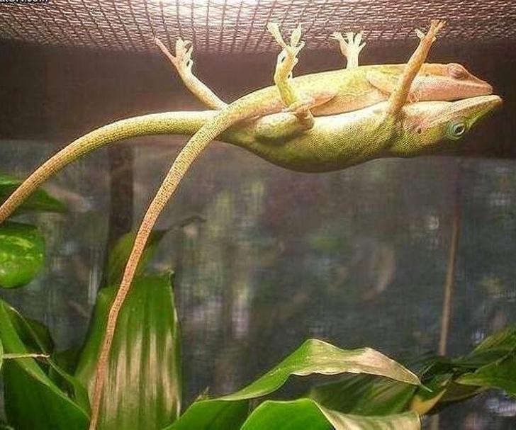 19隻「一個動作就融化你」的超可愛動物 青蛙「超過180度」的劈腿絕技太驚人!