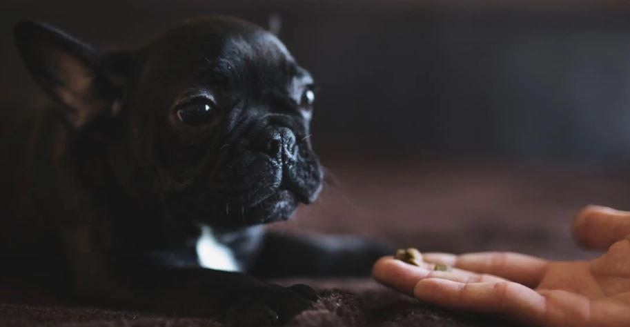電影演的沒騙人!研究證實狗狗可以辨識「誰是壞壞的」 牠特別討厭「某個朋友」就要注意了