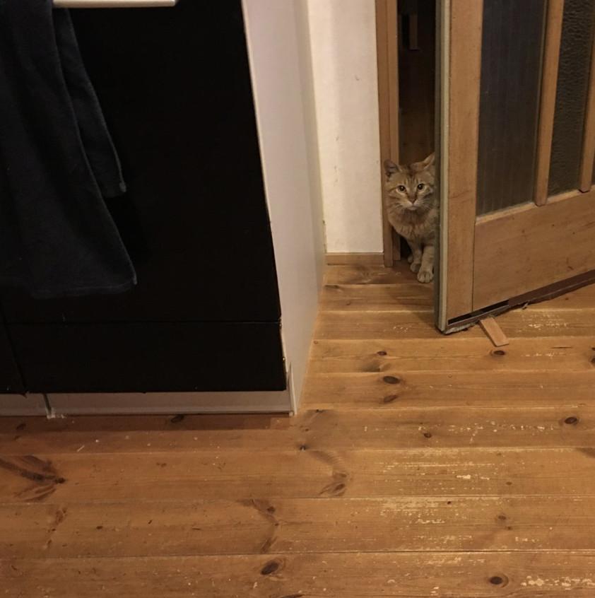 他回家驚現「野貓闖入」的搞笑瞬間 腦補「内心OS」網笑翻:真的很傲驕