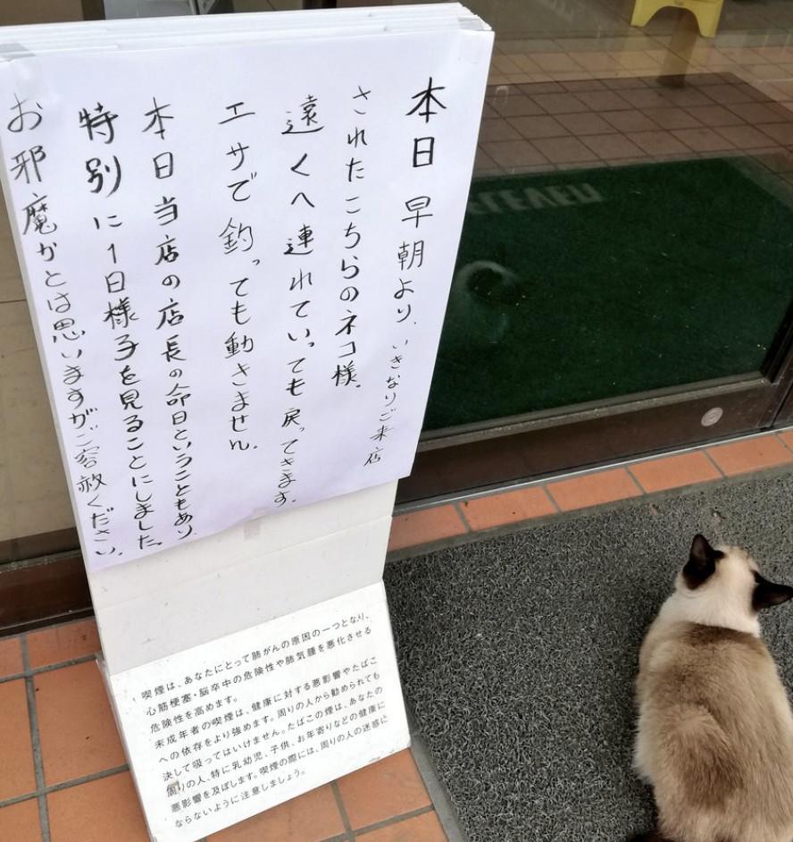 店門口「被浪貓佔據」怎麼樣都不走 店員「翻開日曆」卻驚覺:是祂回來了!