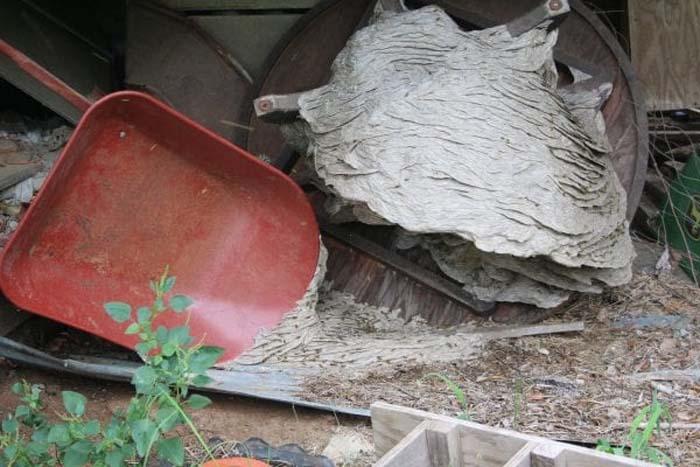 大自然的反撲!黃蜂築出「比平常大4倍」的超級蜂巢 專家曝光原因:人類要負責