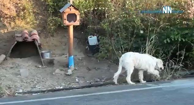 忠犬「連續18個月」守在野外空地 路人心疼「想收養被拒」背後超催淚真相曝光!