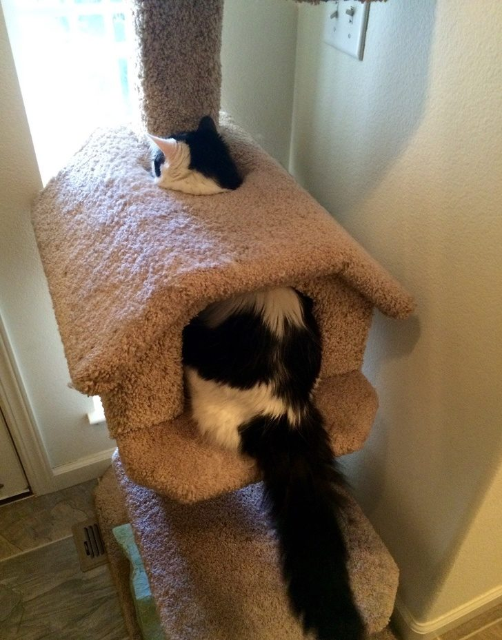 20隻裡面「住著諧星魂」的爆笑貓咪 買新床「硬要睡紙箱」超爽