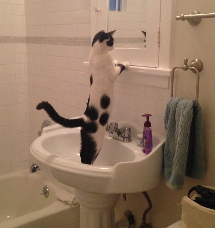 21張爆笑照證明「貓咪的存在本身就是一個謎團」 變身「3腳怪」讓主人永遠找不到!