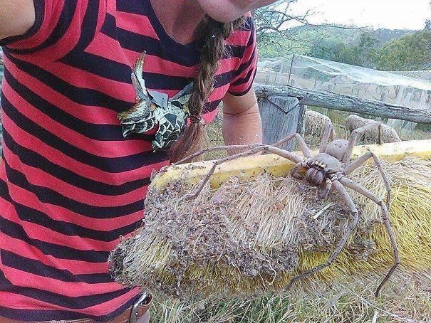 30張證明「命不夠硬最好別去澳洲」的動物奇景 蟒蛇「把鱷魚吞進去」畫面超驚人!