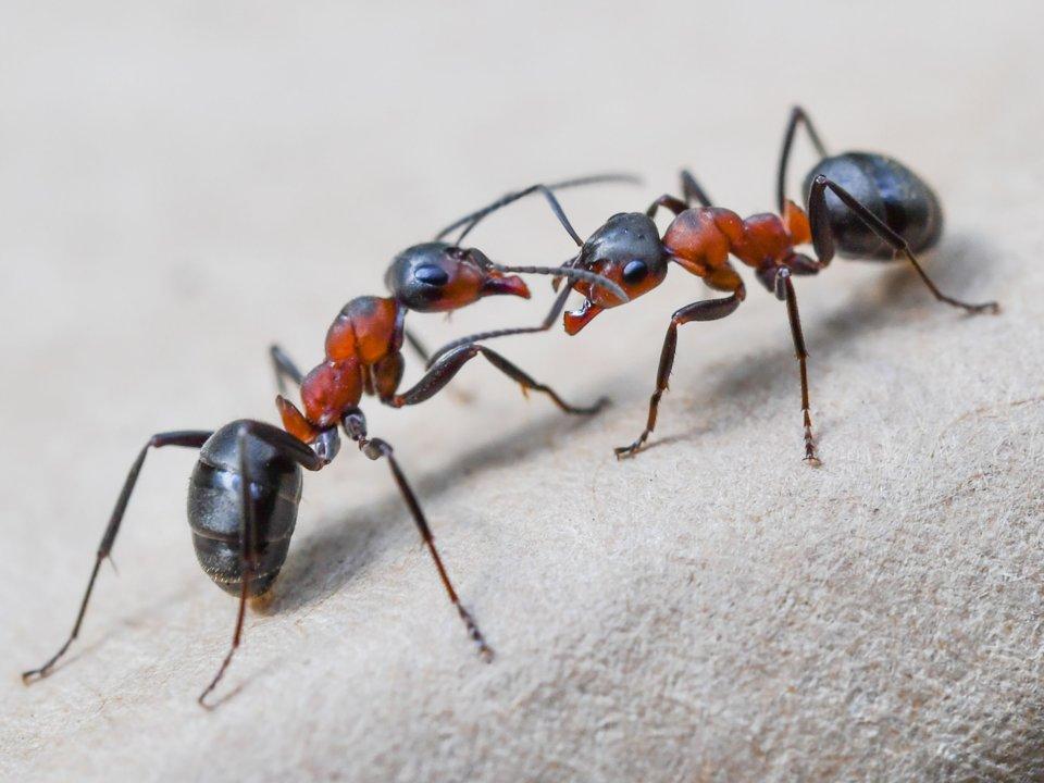 5種就算「世界末日也不會消失」的生物 最強小蟲「丟到太空」也能繼續稱霸外星球!