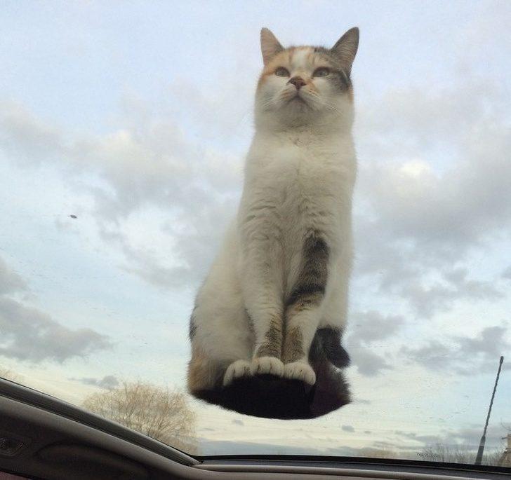 21張竟然「沒有經過修圖」的驚奇錯視照 貓咪救世主「從天空下凡」拯救人纇了!