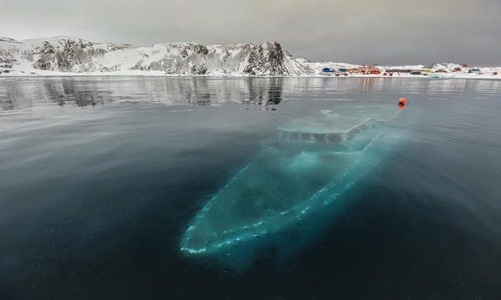 22張證明「地球藏有最強魔法」的超驚奇照 北極熊在冰層下的「呆萌模樣」太詭異!