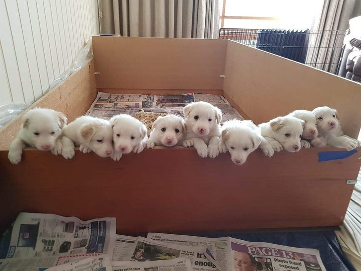 19張證明「寵物都是天使化身」的超療癒照片 小白狗「站一整排」討抱抱❤