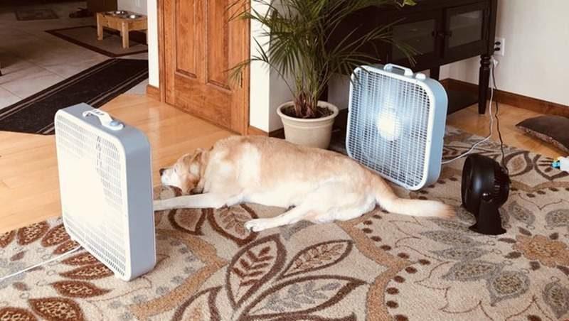 7隻其實比你還怕熱的「融化系崩潰寵物」 找電風扇「蜜桃散熱」只是基本!