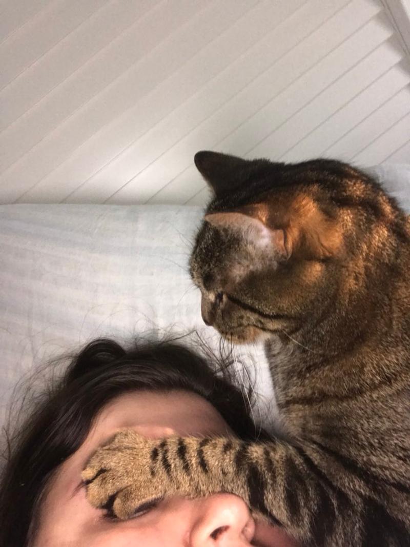 男子常睡到呼吸困難 偷裝攝影機卻拍到「貓壓床」過程...眾奴才羨慕:這是愛!