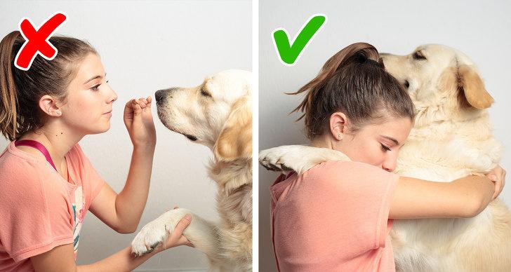 毛孩胖到快動不了!10個讓寵物「不用多花錢就能瘦下來」的超有效方法