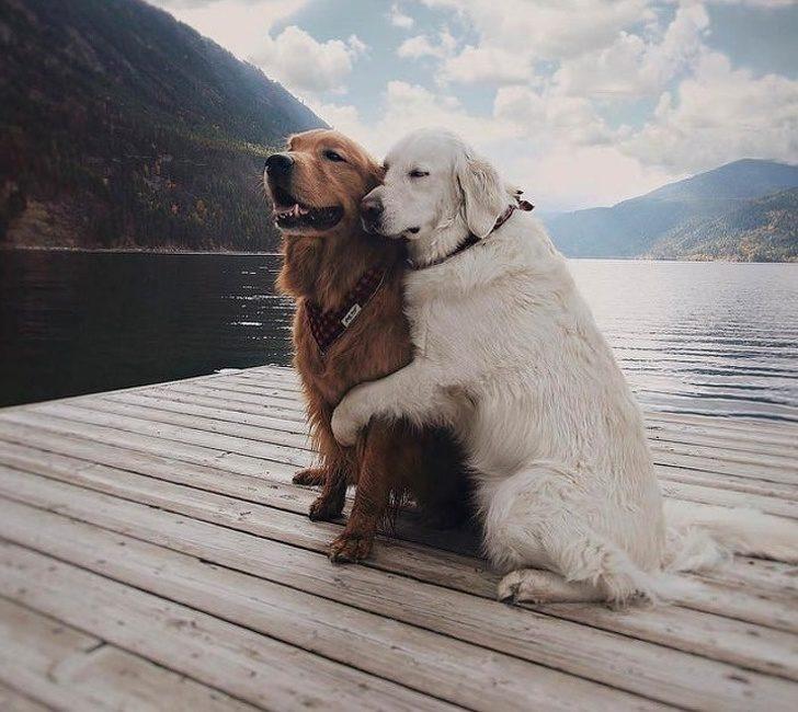24張「單身狗只能羡慕」的恩愛毛孩照 狐狸「甜蜜咬耳朵」的畫面閃瞎全網❤