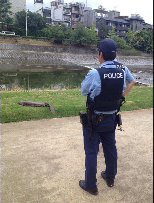 山神出現了?日本驚見超巨大「外星生物」民眾嚇到報警 網友一看:牠是國寶!