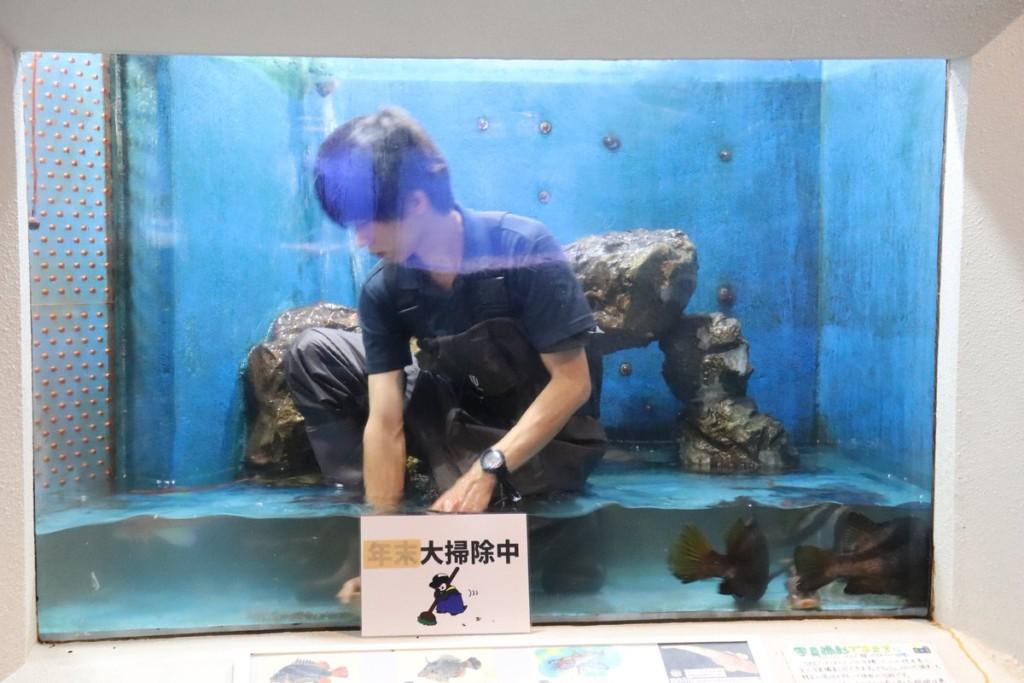 日本水族館竟改行「展出帥哥」?「謎樣美男」被肉搜:跪求打掃時間表!