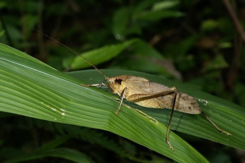 他在家中驚見「超詭異昆蟲」 網一看大驚「千萬不能打」:是親人回家了!