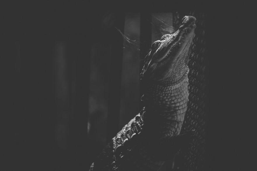15張「動物們被困在籠子裡」的真實面貌 牠「伸手求救」卻依然得不到自由!