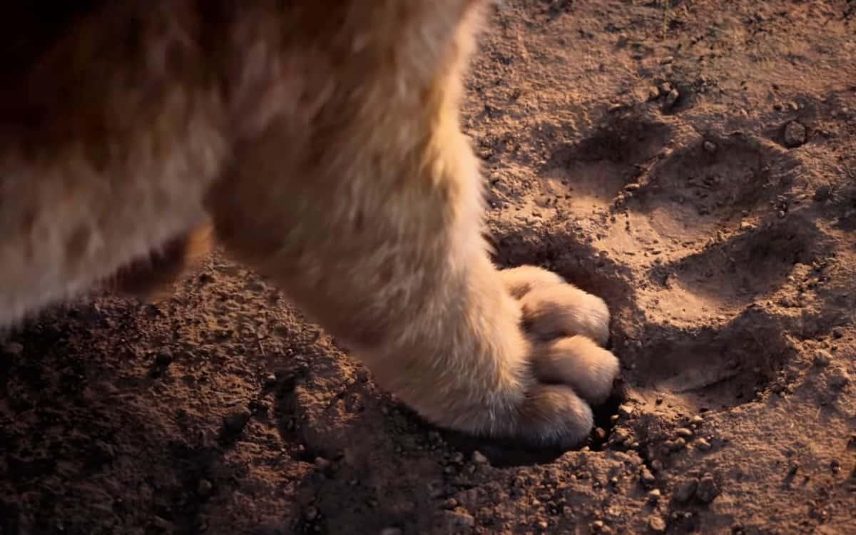 影評/天后加持《獅子王》還原度超高 經典重現卻少了一點「當年的感動」