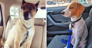 被主人出賣!22張「發現自己要去找獸醫」的眼神死寵物照 下車驚覺「不是公園」太崩潰