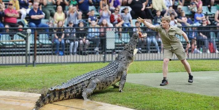 「鱷魚先生」的天菜兒子PO餵食鱷魚照 網看「神還原畫面」爆淚:爸爸一定很欣慰!