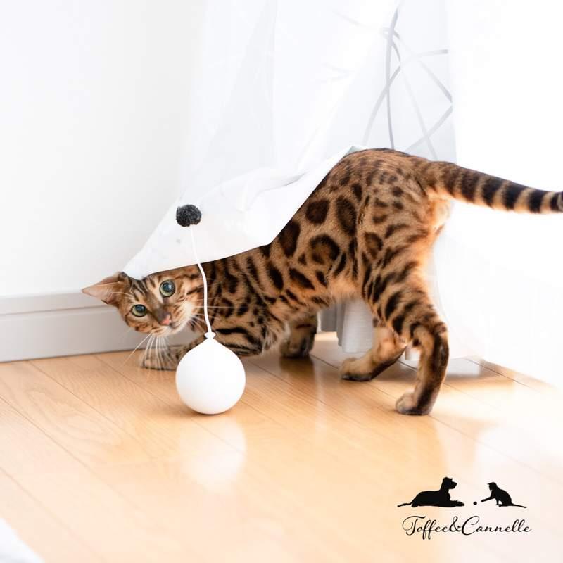 他在家驚見「萌貓→蟒蛇」嚇壞 回頭聽到「喵喵聲」網冷靜回:季節到了