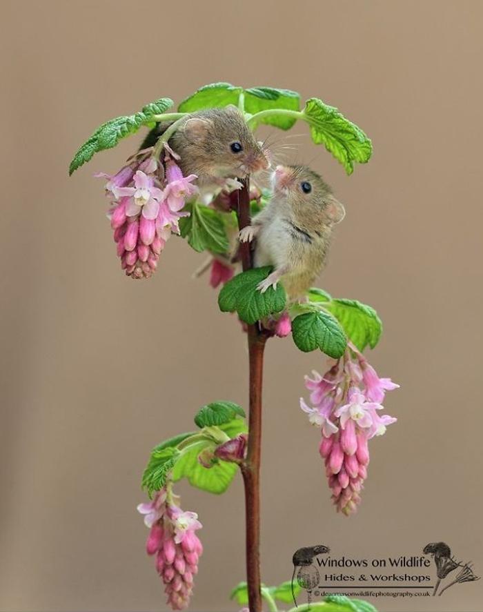 攝影師拍下超可愛「網美型小巢鼠」的冒險旅程 鼠生「短短半年」但絕對比你還精彩!