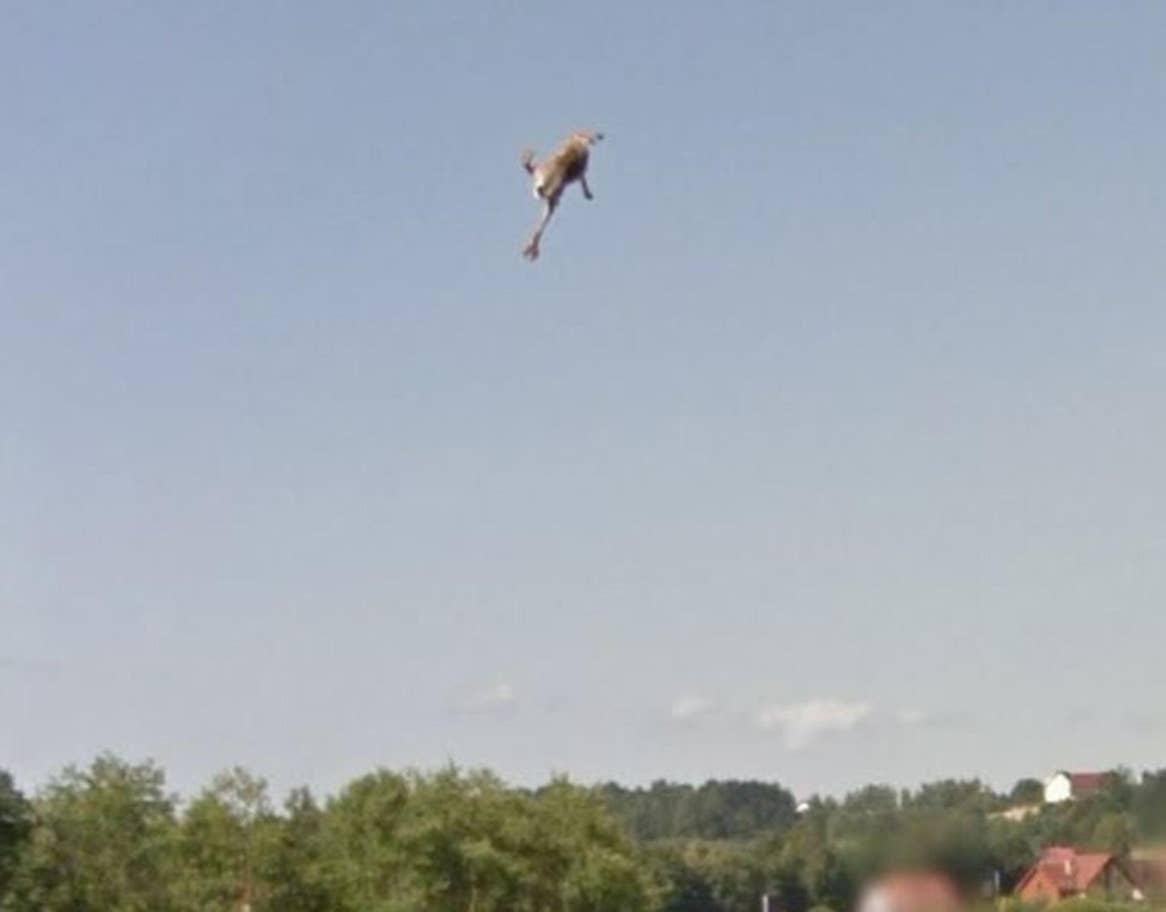 街景地圖意外捕捉「玉兔飛躍天際」驚奇畫面 揭「背後可怕原因」網驚:希望牠還活著!