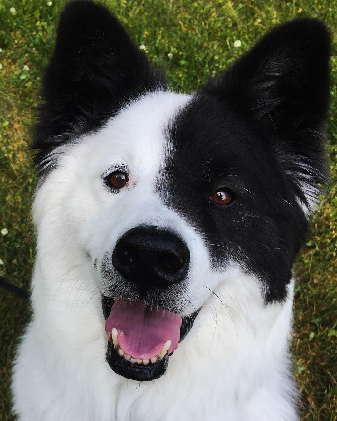 20隻想馬上「抱緊處理」的超萌混血小狗 只要「加上科基」就是小短腿保證!
