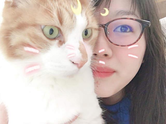 SNOW推出「貓咪專用濾鏡」讓主奴一起賣萌 網友試過超嗨:狗狗也可用!