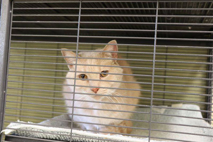 美國警推出「創新停車費繳法」!可以「捐貓飼料」代替繳費 網大讚:超有意義