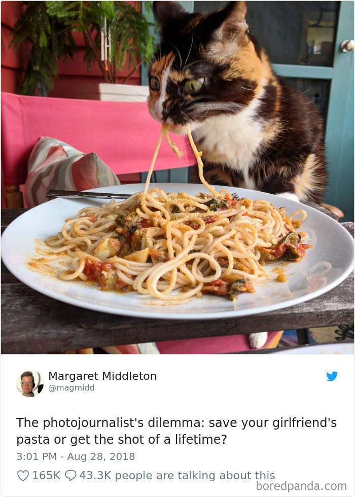 25則越看越療癒的「貓咪爆笑日常」 牠產檢「發現自己懷孕」的表情超八點檔!