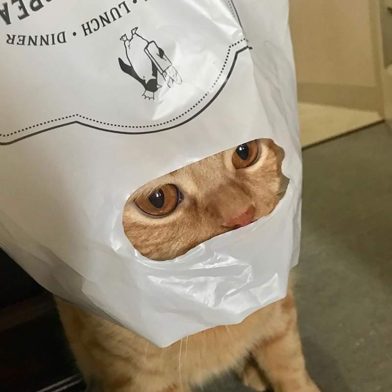 減肥貓「想吃又怕胖」的超萌表情爆紅 牠看著布丁的眼神「太掙扎」網笑翻:我懂!