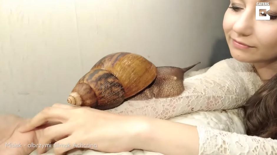 影/獵奇妹養了超巨「非洲蝸牛」當小孩疼 最享受「濕黏感」她:爬在身上很棒