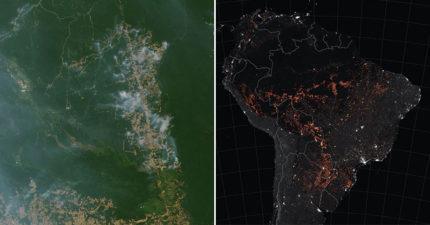 NASA公佈「亞馬遜野火狂燒」衛星圖震驚世界 地球之肺「佈滿紅點」網爆淚:快沒空氣了!