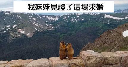 22隻動物「從電影穿越到現實」的驚喜瞬間 他在路邊遇見《獅子王》的丁滿和彭彭!