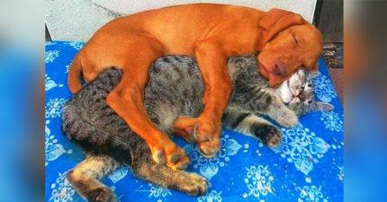 25張證明「動物的愛可以跨越族群」的暖心照 貓皇竟然靠在「大蟒蛇」身上睡覺!