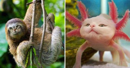 如果全世界的動物都是「貓咪的臉」會怎樣?超魔性「貓臉無尾熊」完全無違和XD