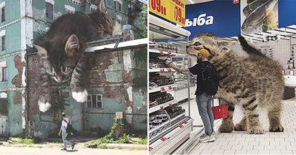 藝術家創造「如果貓咪變超巨大」的怪萌世界 「跟巨貓一起玩雪」畫面太夢幻:想在那裡生活~(20張)