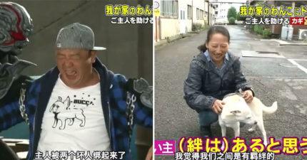 影/日本節目出奇招「整狗」笑壞網友 到底要救「被抓走的主人」還是吃罐罐?