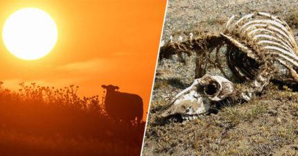 今年7月有望變「有史以來」最高溫月份 全球打破「溫度紀錄」專家警告:未來會更慘!