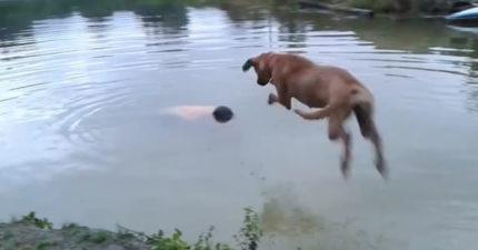 影/主人想測試狗狗反應「裝溺水」  毛孩下秒「捨命舉動」卻讓他超後悔!網淚崩:是英雄