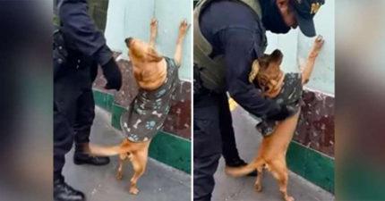 流浪狗到警局討食「意外找到爽缺」 網友笑翻:這工作好享受!