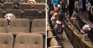 看電影旁邊坐毛小孩?訓練師帶狗去影院上課 牠們的「坐姿+專心程度」都是考驗!