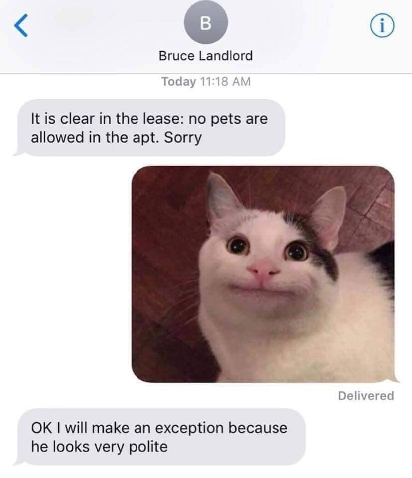 爆紅梗圖「假笑貓」不是P圖?主人PO「禁寵房東對話」用一張圖就馬上收服