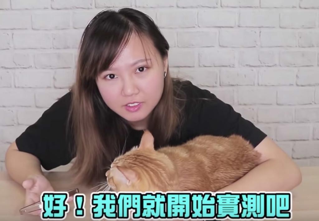 影/5步驟測試貓皇「到底信不信你」 往臉上「揮1拳」牠的反應最明顯!