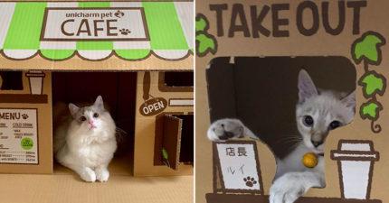 「貓咪專用咖啡廳」貓砂盆紙箱爆紅 「喵星人當店長」設計讓網樂翻!